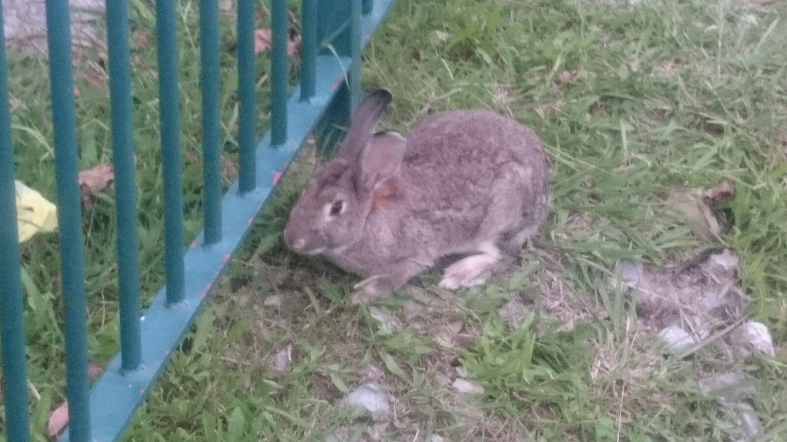 Conejo de Puio